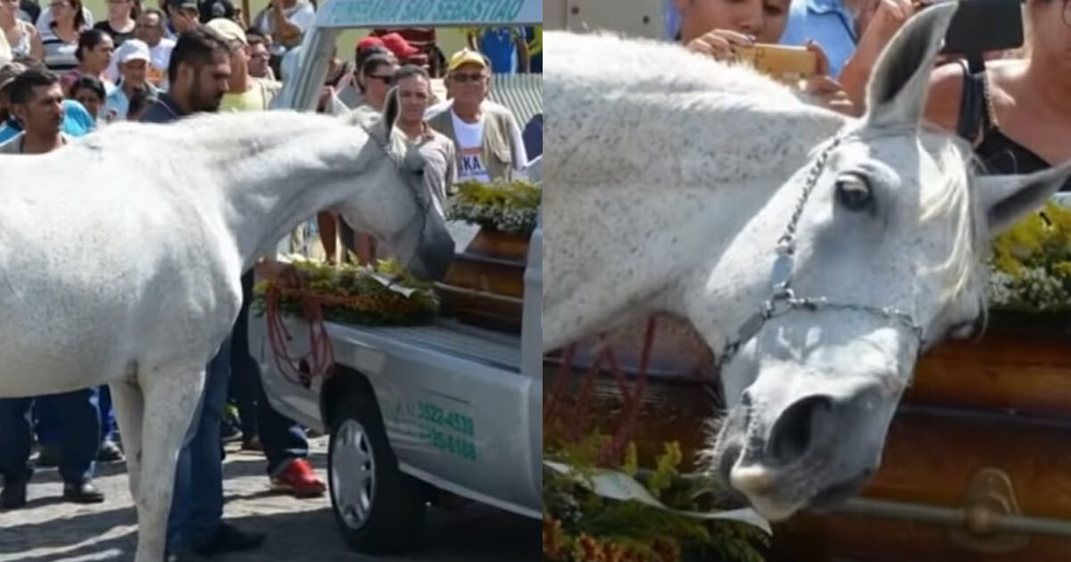 Heartbreaking video of grieving horse crying at his owner's funeral goes viral