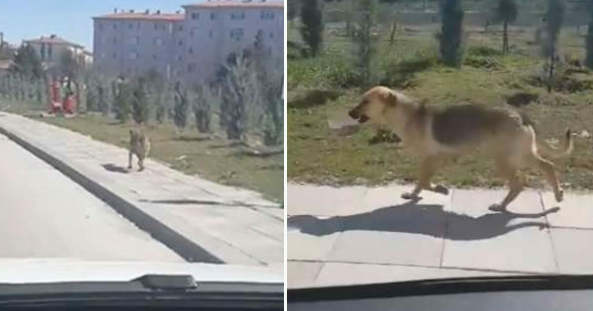 Image result for Man sees homeless dog carrying bowl of food and decides to follow her