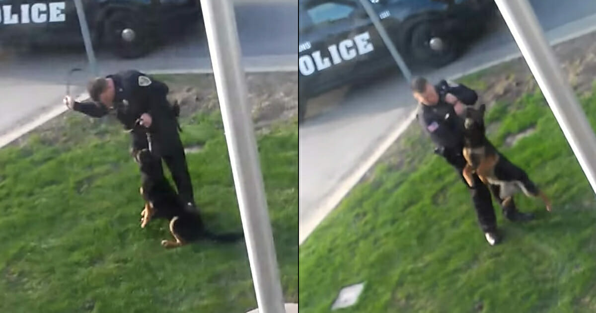 Image result for Police officer secretly filmed doing this to a police dog – now the clip has gone viral