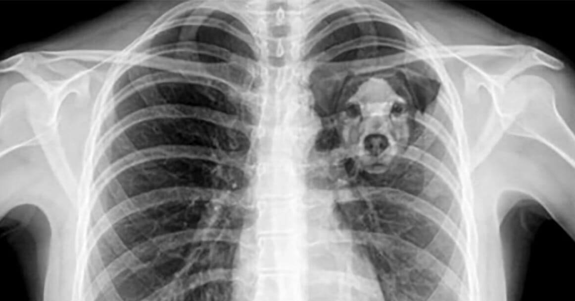 Scientists explain: The reason losing a dog feels the same as losing a human loved one